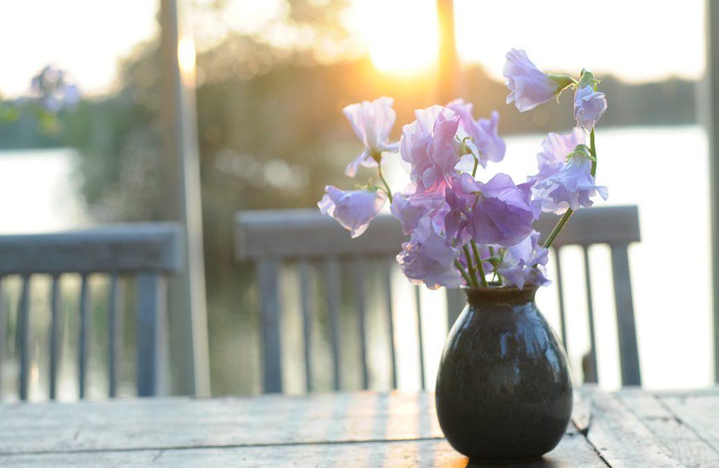Bästa blå luktärten 'Charlies Angel'