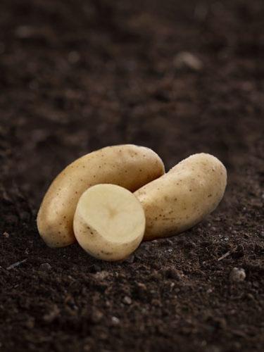 Potatis Amandine 1 kg