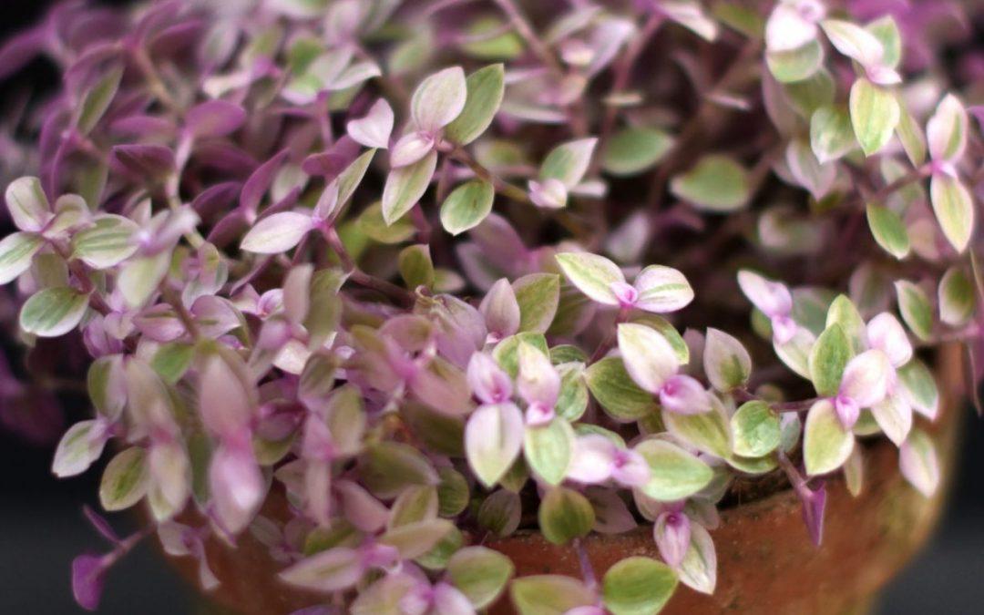 Krukväxter i webbshoppen