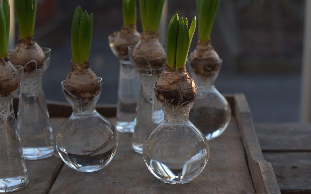Handblåsta hyacintvaser från Småland