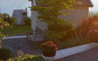 Liten rapport från min trädgård