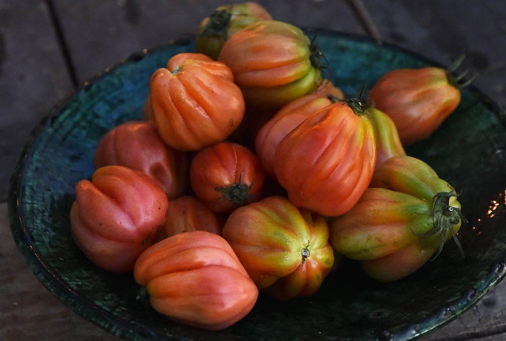 Nytt poddavsnitt, bästa tomatpajen & tomat-tips!