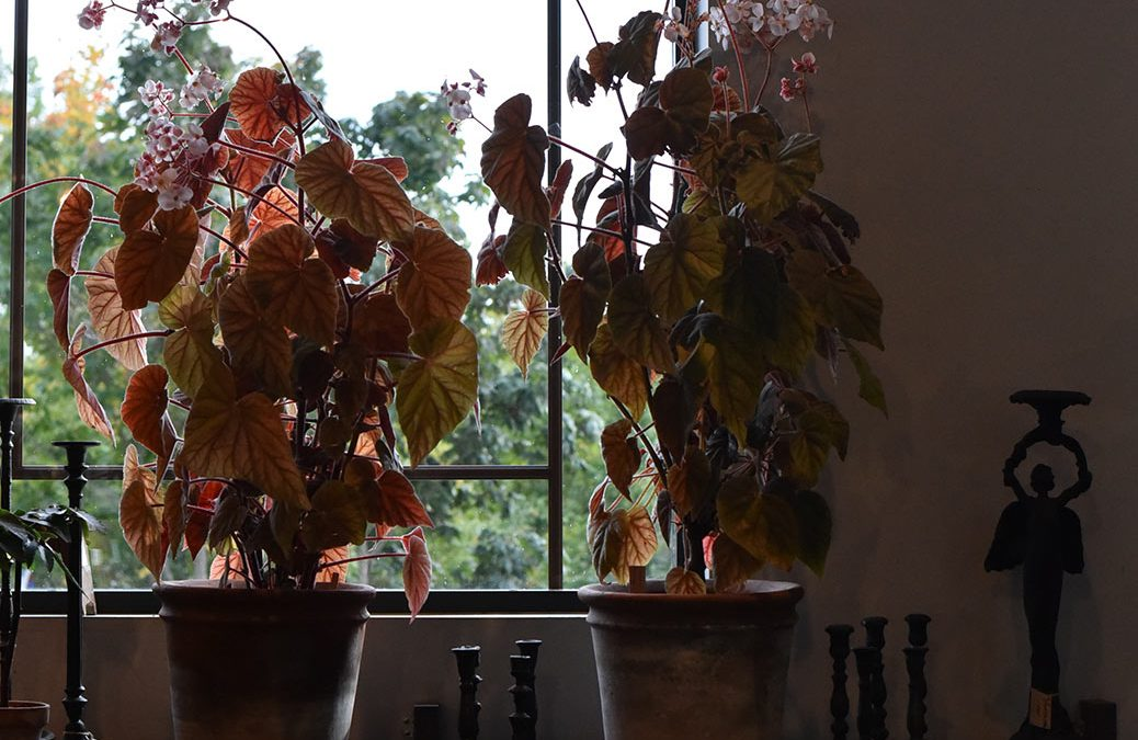 Nytt poddavsnitt om krukväxter, vigslar och tatueringar